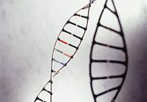 В США запрещено патентование генов